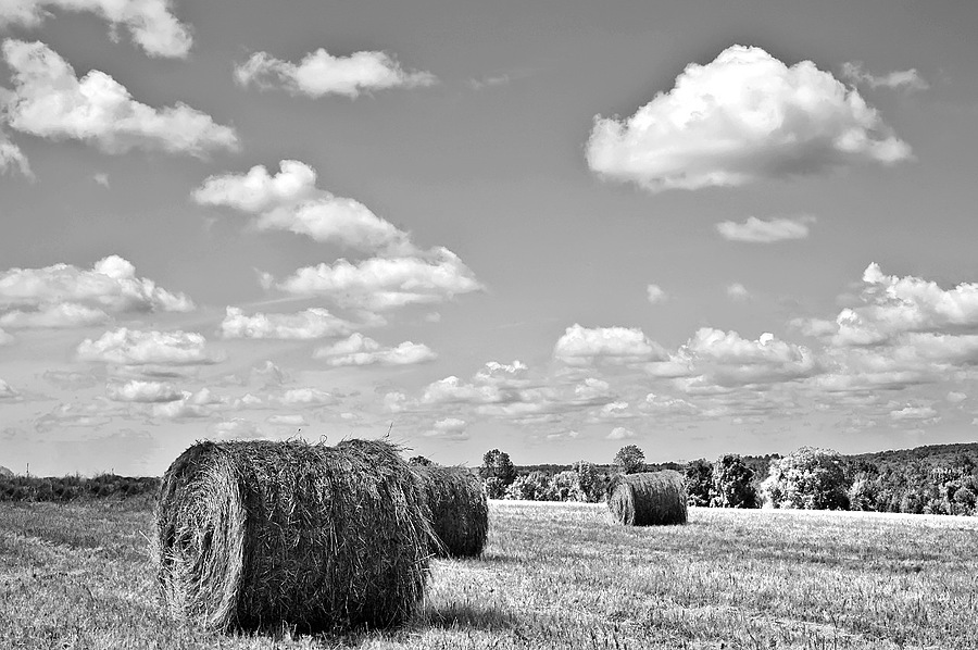 Roll Out The Hay | LEICA SUMMARON 35MM F/3.5 <br> Click image for more details, Click <b>X</b> on top right of image to close