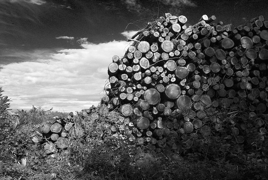 Logs by the roadside | LEICA SUMMARON 35MM F/2.8 <br> Click image for more details, Click <b>X</b> on top right of image to close