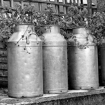 Milk churns | LEICA SUMMILUX 50MM F/1.4 PRE ASPH (E43)