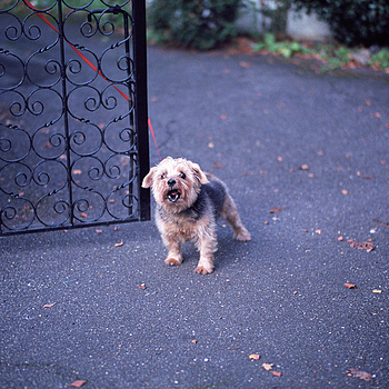 angry cute dog | SUMMILUX-M 1:1.4/50 ASPH <br> Click image for more details, Click <b>X</b> on top right of image to close