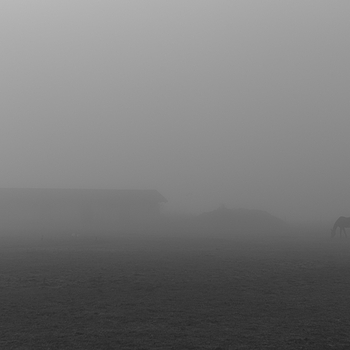 The Foggy Sunday Morning | SUMMILUX-M 1:1.4/50 ASPH <br> Click image for more details, Click <b>X</b> on top right of image to close