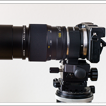 Leica Macro-Elmarit-R 60mm/2.8 on NEX-7 with Metabones adapter Leica-R | APO-SUMMICRON-M 75MM F/2 ASPH <br> Click image for more details, Click <b>X</b> on top right of image to close