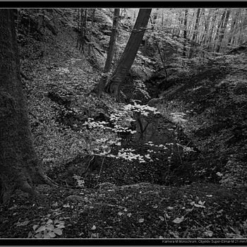 Leica M Monochrom with Super-Elmar-M 21mm/3.4 @ f/9, IR filter R715 | LEICA 21MM SUPER-ELMAR-M F/ 3.4 ASPH LENS <br> Click image for more details, Click <b>X</b> on top right of image to close