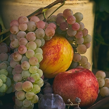 Grapes & Plums from Walla Walla | APO-SUMMICRON-M 75MM F/2 ASPH <br> Click image for more details, Click <b>X</b> on top right of image to close