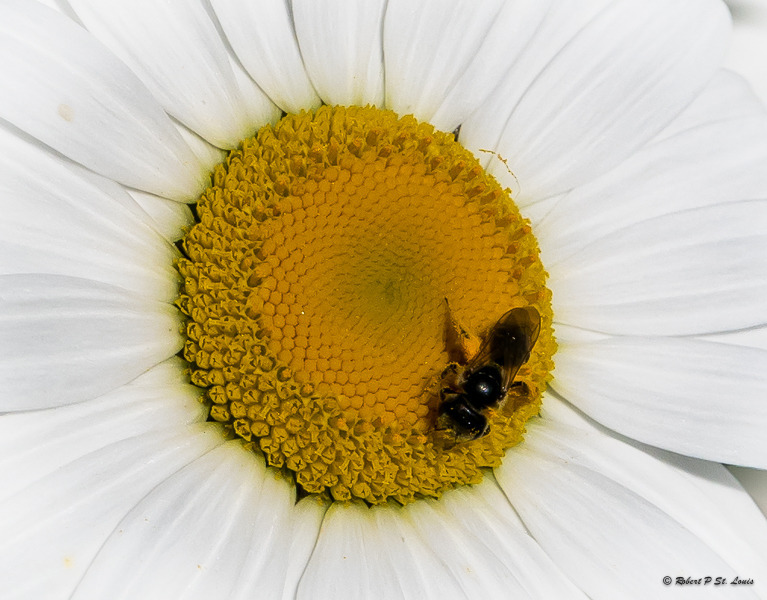 Pollinator's Playground | LENS MODEL NOT SET <br> Click image for more details, Click <b>X</b> on top right of image to close