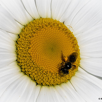 Pollinator's Playground | LENS MODEL NOT SET