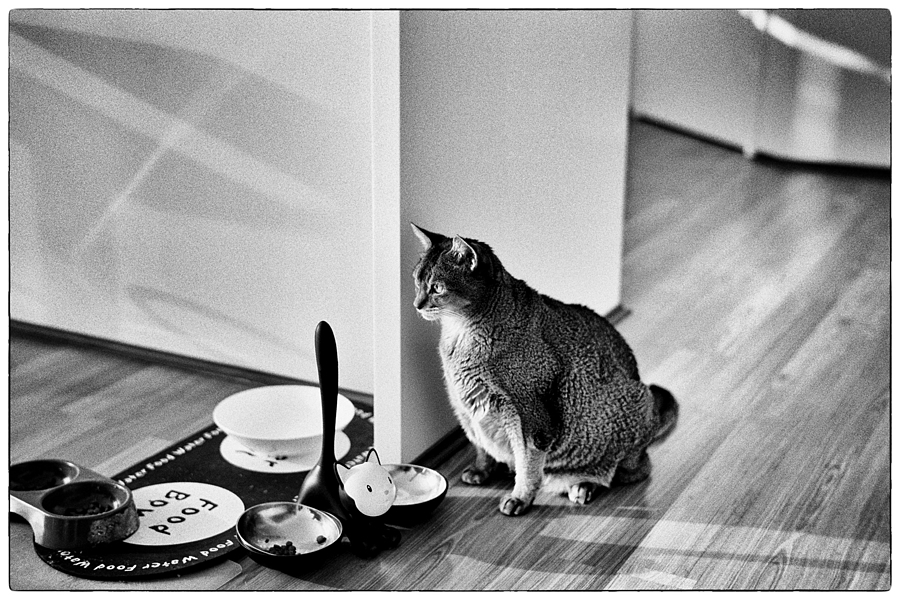Breakfast time | SUMMILUX-M 1:1.4/50 ASPH <br> Click image for more details, Click <b>X</b> on top right of image to close