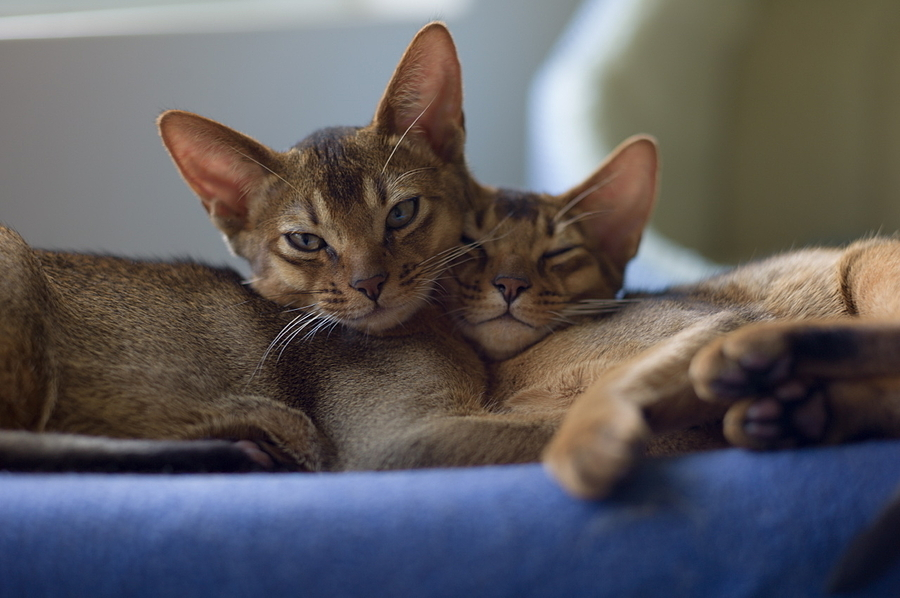 Felix & Chester cuddle | SUMMILUX-M 1:1.4/50 ASPH <br> Click image for more details, Click <b>X</b> on top right of image to close