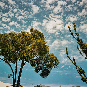 The summer skies in Perth | LEICA SUMMICRON 90MM F2