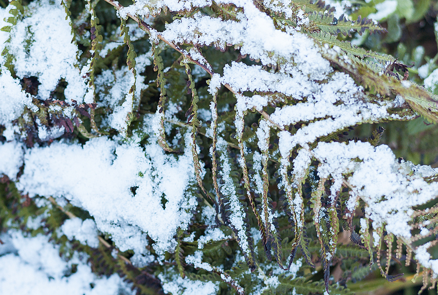 Snow in the Garden | LEICA SUMMARIT 75MM F2.5 <br> Click image for more details, Click <b>X</b> on top right of image to close