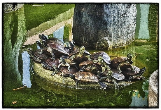 Stacked Turtles | LEICA SUMMARON 35MM F/3.5 <br> Click image for more details, Click <b>X</b> on top right of image to close