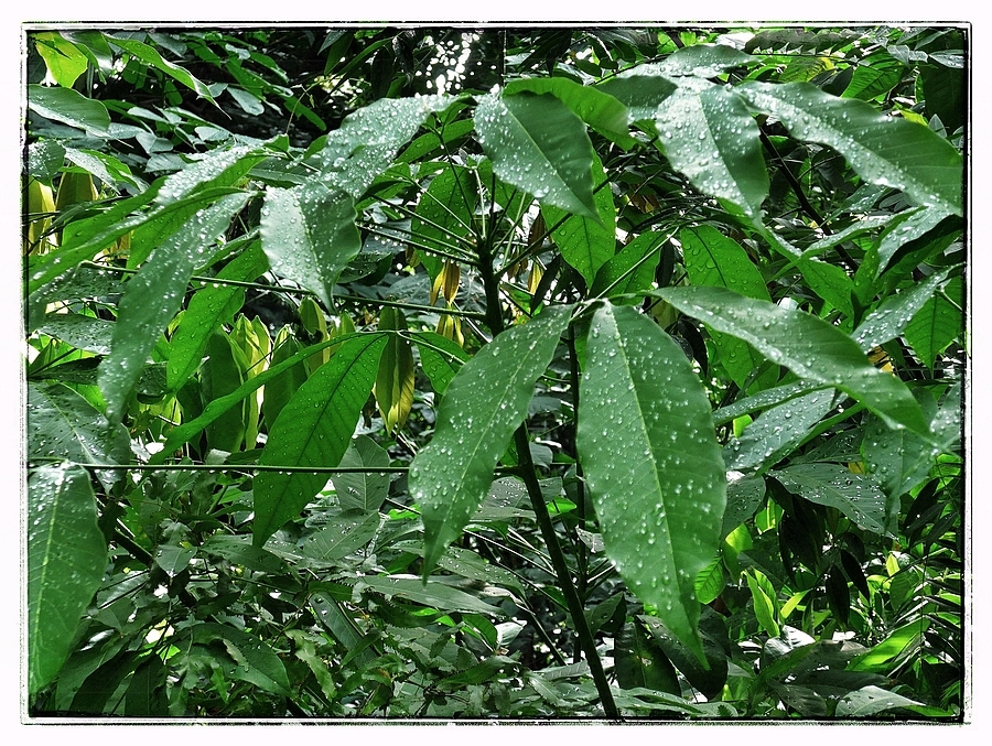 Wet Leaves | LENS MODEL NOT SET <br> Click image for more details, Click <b>X</b> on top right of image to close