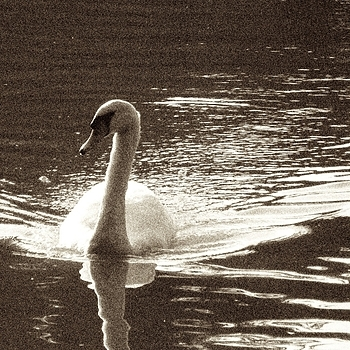 Swan Lake | LENS MODEL NOT SET