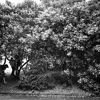 JUNE 11 - Children playing in the rhododendrons | LEICA ELMARIT 28MM F2.8