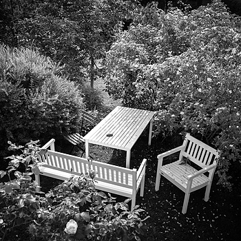 JUNE 15 - The garden | LEICA ELMARIT 28MM F2.8 <br> Click image for more details, Click <b>X</b> on top right of image to close