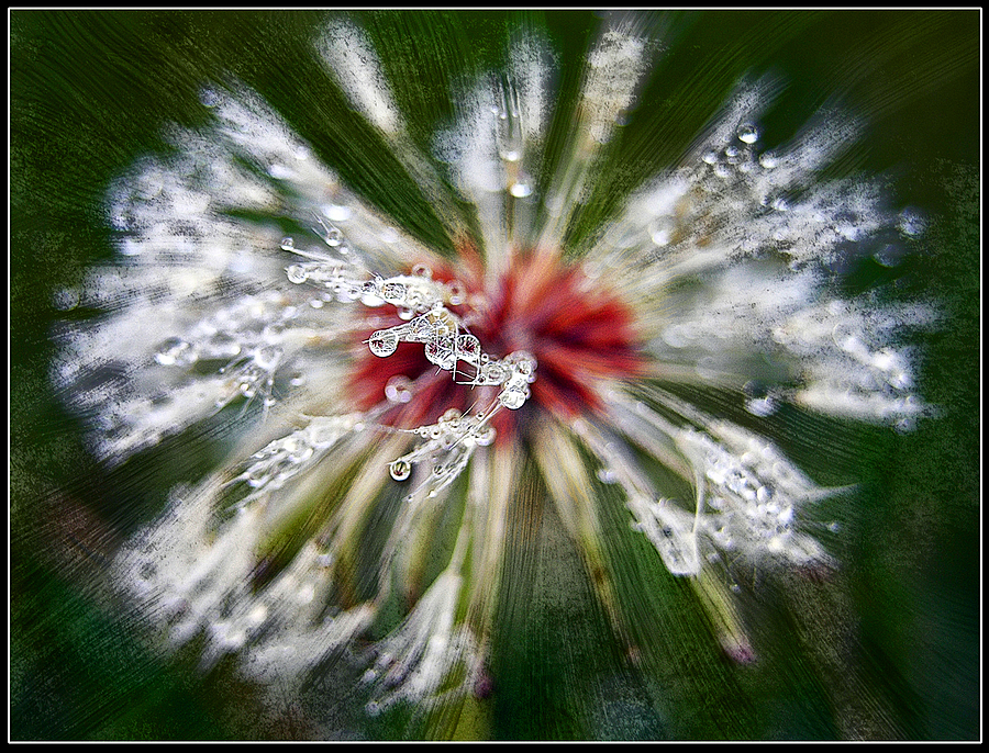 Dandelion rain | DC VARIO-ELMARIT 1:2.8-3.7/7.4-88.8 ASPH <br> Click image for more details, Click <b>X</b> on top right of image to close