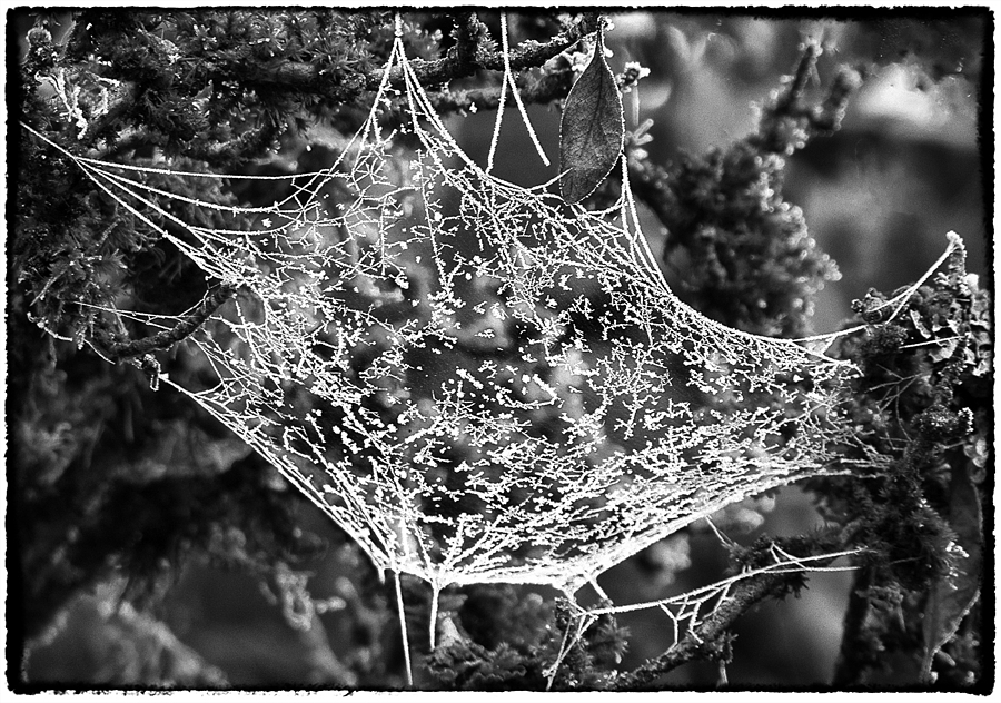 Spider lace | DC VARIO-ELMARIT 1:2.8-3.7/7.4-88.8 ASPH <br> Click image for more details, Click <b>X</b> on top right of image to close
