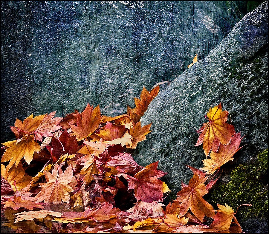 Leaf fall | DC VARIO-ELMARIT 1:2.8-3.7/7.4-88.8 ASPH <br> Click image for more details, Click <b>X</b> on top right of image to close