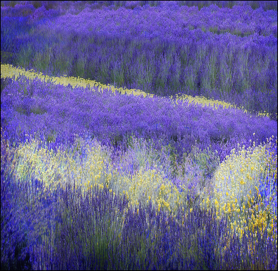Remembering lavender | DC VARIO-ELMARIT 1:2.8-3.7/7.4-88.8 ASPH <br> Click image for more details, Click <b>X</b> on top right of image to close