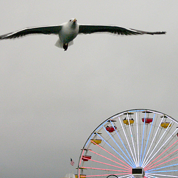 Ferris Wheel at Santa Monica Pier | LENS MODEL NOT SET <br> Click image for more details, Click <b>X</b> on top right of image to close