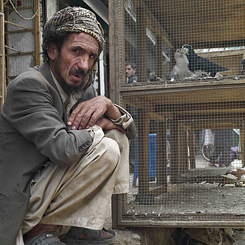 Fagins Bird Market Kabul | LEICA SUMMICRON 28MM F2 ASPH