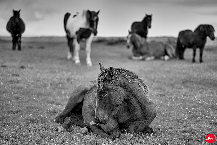 Wild Foal | SUMMILUX-M 1:1.4/50 ASPH <br> Click image for more details, Click <b>X</b> on top right of image to close
