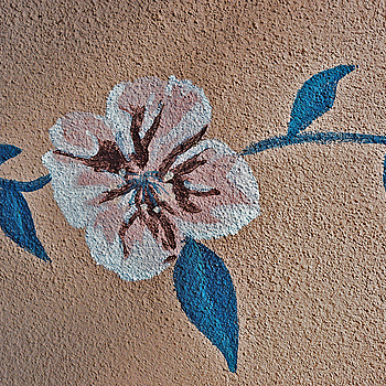 Flower on Stucco