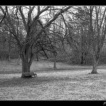 Abandoned Bench | ZEISS ZM C SONNAR T* F1.5 50MM <br> Click image for more details, Click <b>X</b> on top right of image to close
