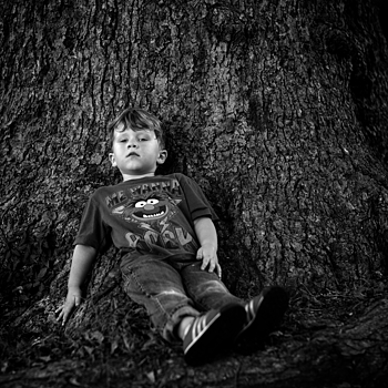 Resting on a Tree | SUMMILUX-M 1:1.4/50 ASPH <br> Click image for more details, Click <b>X</b> on top right of image to close