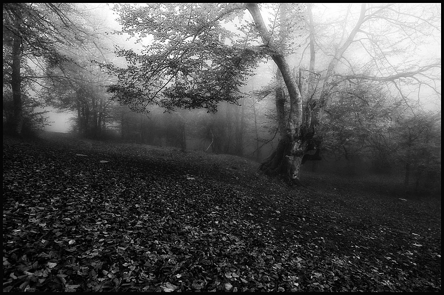 FOG IN THE FOREST | LENS MODEL NOT SET <br> Click image for more details, Click <b>X</b> on top right of image to close