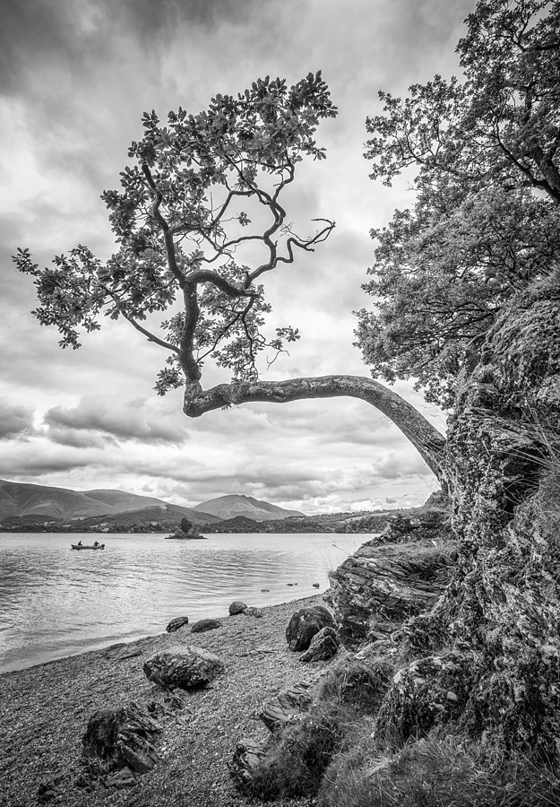 Tree out of rock Derwentwater | VOIGTLANDER 15MM / F 4.5 SUPER WIDE HELIAR <br> Click image for more details, Click <b>X</b> on top right of image to close