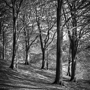Autumn Trees in B&W | LENS MODEL NOT SET <br> Click image for more details, Click <b>X</b> on top right of image to close