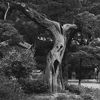 Spooky tree | DC VARIO-SUMMICRON 1:2.0-3.3/5.1-19.2 ASPH <br> Click image for more details, Click <b>X</b> on top right of image to close