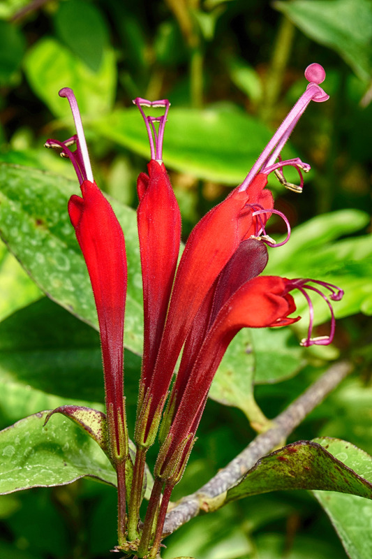 Red tropic blossom | LENS MODEL NOT SET <br> Click image for more details, Click <b>X</b> on top right of image to close