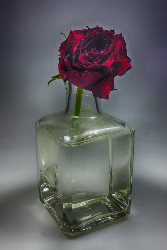 Red rose in glass fading away | LENS MODEL NOT SET <br> Click image for more details, Click <b>X</b> on top right of image to close