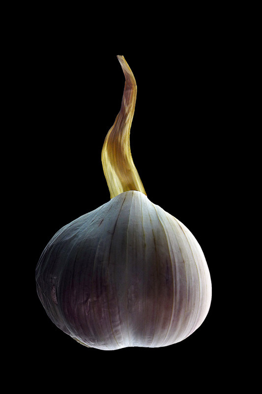 For friends of garlic | LENS MODEL NOT SET <br> Click image for more details, Click <b>X</b> on top right of image to close