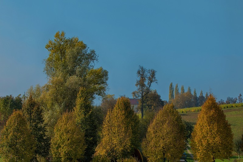 Landscape with trees | LENS MODEL NOT SET <br> Click image for more details, Click <b>X</b> on top right of image to close