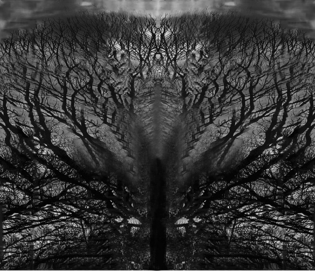 The cursed tree of knowledge (proc`d) | LENS MODEL NOT SET <br> Click image for more details, Click <b>X</b> on top right of image to close