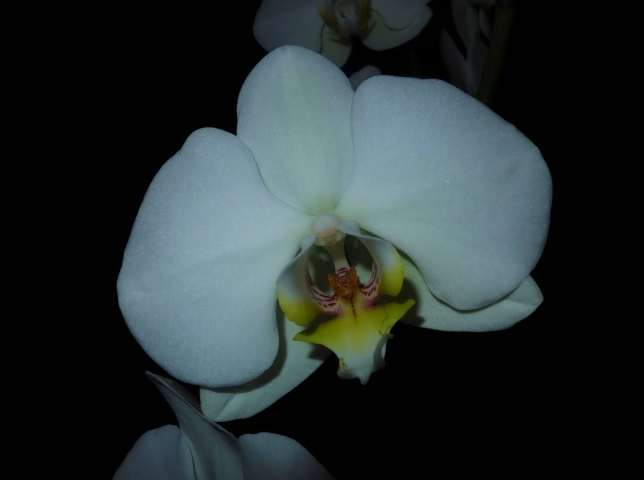 Single white orchid | LENS MODEL NOT SET <br> Click image for more details, Click <b>X</b> on top right of image to close