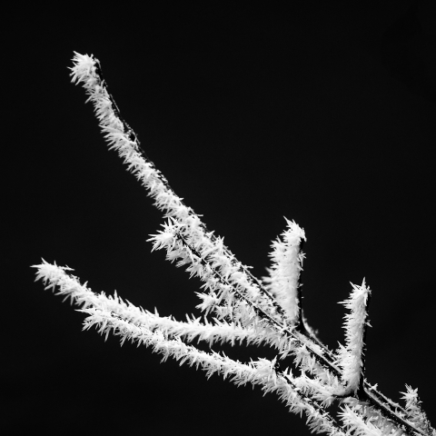 Hoarfrost | LENS MODEL NOT SET <br> Click image for more details, Click <b>X</b> on top right of image to close