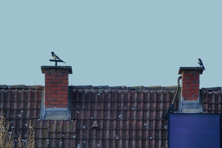 2 Magpies | LENS MODEL NOT SET <br> Click image for more details, Click <b>X</b> on top right of image to close
