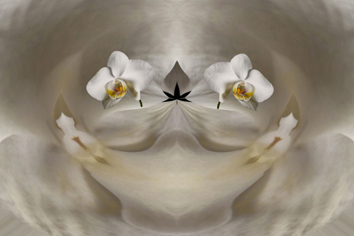Orchids in bed #2 | LENS MODEL NOT SET <br> Click image for more details, Click <b>X</b> on top right of image to close
