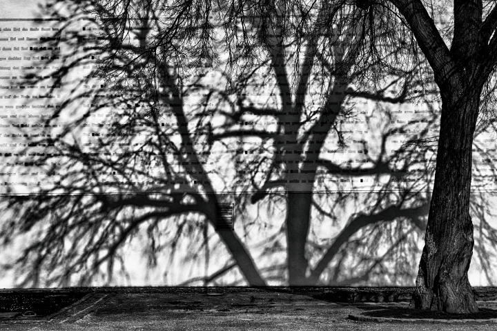 Tree with its shadow | LENS MODEL NOT SET <br> Click image for more details, Click <b>X</b> on top right of image to close
