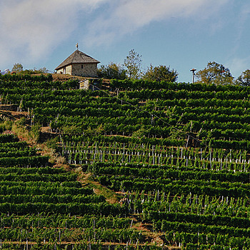 Famous vineyard (Spitz -Wachau) | LENS MODEL NOT SET <br> Click image for more details, Click <b>X</b> on top right of image to close