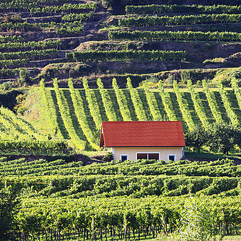Vineyard with house | LENS MODEL NOT SET <br> Click image for more details, Click <b>X</b> on top right of image to close