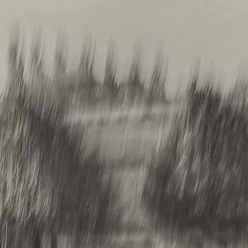 Landscape with trees - moving camera b&w | LENS MODEL NOT SET <br> Click image for more details, Click <b>X</b> on top right of image to close
