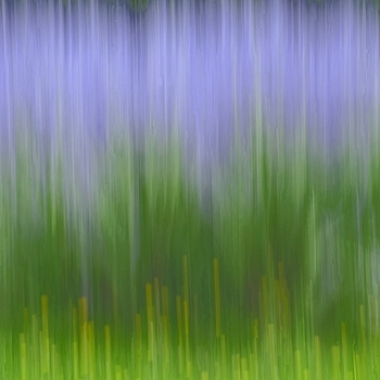 Impression of lavender