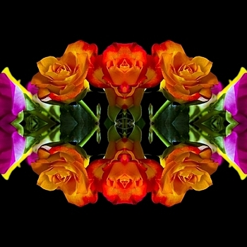 Arrangement of roses | LENS MODEL NOT SET <br> Click image for more details, Click <b>X</b> on top right of image to close