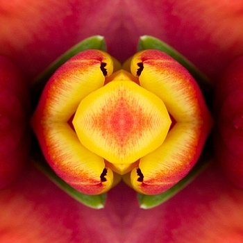 Fruit of tulips | LENS MODEL NOT SET