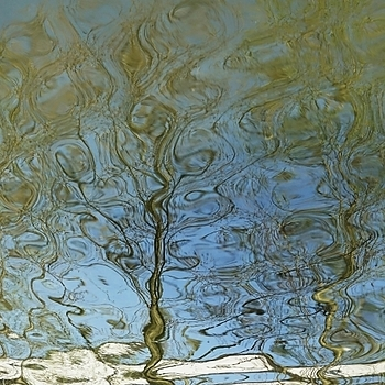 Reflection of trees in water | LENS MODEL NOT SET <br> Click image for more details, Click <b>X</b> on top right of image to close